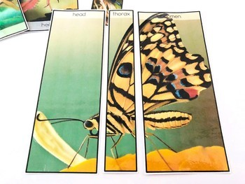 Insects: Body Part Puzzles