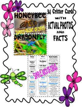 Insects, Bugs, and Backyard Critters