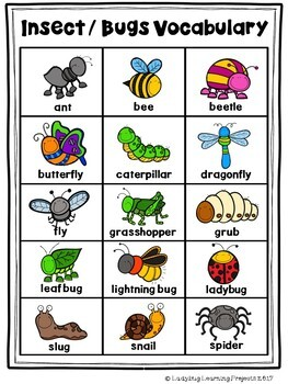 Insects, Bugs, and More Picture Word Card Mini-Set For Kindergarten