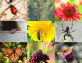 Insects, Bugs, and Spiders from Utah-4x6 jpeg pictures for