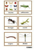 Insects Cards