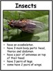 Insects - Characteristics of Animals Leson Plan, Photos, Poster