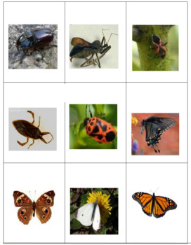 Insects -- Checkers with a DIFFERENCE