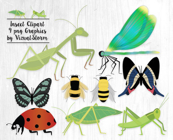 Insect Clip Art - 9 Hand Drawn Detailed Bug Illustrations - Bees and Insects