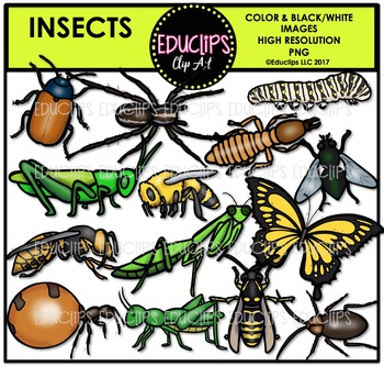 Insects Clip Art Bundle {Educlips Clipart}