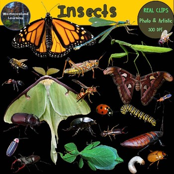 Insects Clip Art Real Clips Photo & Artistic Digital Stickers 44 Images