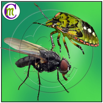 Insects Clip Art Variety Set 1 Photo Clipart