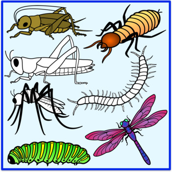 Insects Clipart By The Cher Room