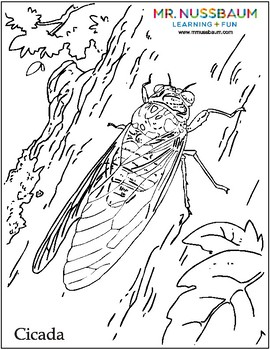 Insects Coloring and Dot-to-Dots
