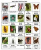 Insects Concentration