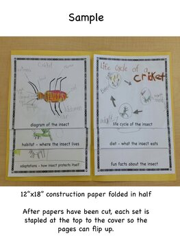 Insects: Creating a Report in a New and Fun Way!