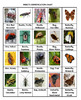 Insects Crossword Puzzles
