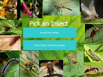 Insects Dichotomous Key