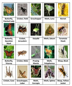 Insects Dominoes