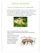 Insects (Invertebrates)