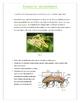 Insects (Invertebrates)