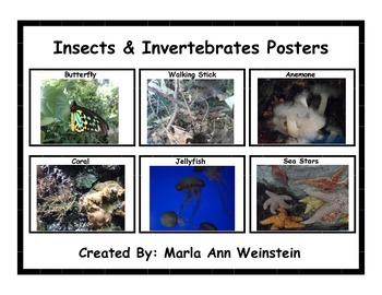 Insects & Invertebrates Posters
