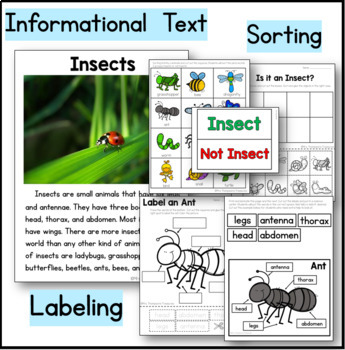 Insects Kindergarten Science NGSS