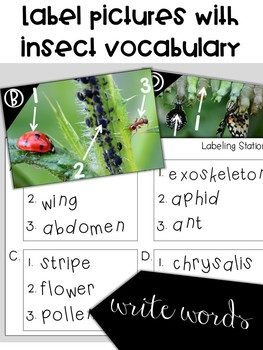 Labeling Insects