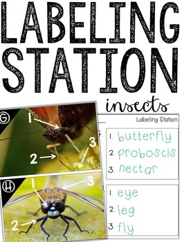 Label It! (Insects Edition)