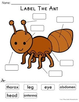Insects Bugs and Spiders Labeling Center Activities