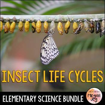 Insects - Life Cycle Bundle