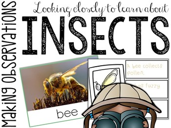 Insects: Making Observations Picture Cards & Station