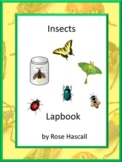 Insects, Bugs, Interactive Lapbook, Preschool, Kindergarten, Special Education