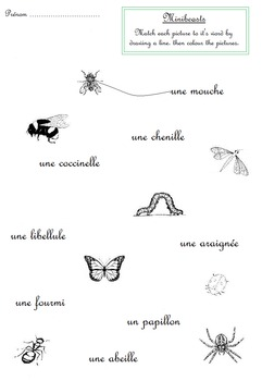 Insects / Minibeasts French Handwritting matching worksheet
