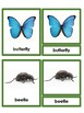 Insects Nomenclature Cards