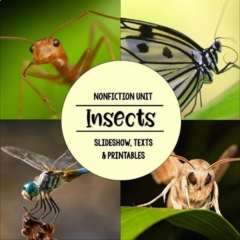 Insects Nonfiction Close Reading & Visual Vocabulary Unit