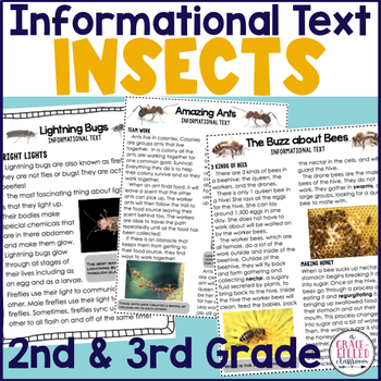 Insects Informational Text Practice