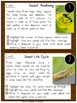 Nonfiction Leveled Reading Passages and Questions - Insects