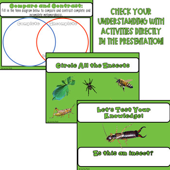 Insects Power Point - FOSS Science