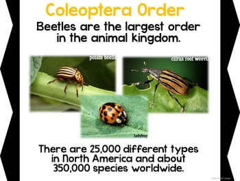 Insects: PowerPoint, SMART Board and 5 Student Activities