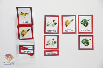 Insects: Praying Mantis (Life Cycle Pack)