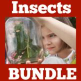 Insects | Preschool Kindergarten 1st Grade | Bugs | Activi
