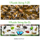 Insects Puzzle (Number and Letter Recognition with Real Photos)