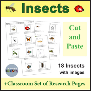 Insects Research and Cut and Paste Activity