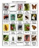 Insects Rummy