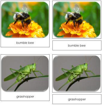 Insect Safari Toob Cards - Montessori