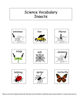 Insects: Science Unit for Kids with Autism