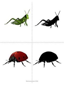 Insects Shadow matching