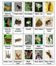 Insects Sorting Game