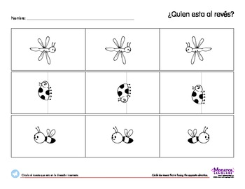 Insects Spanish Lesson (3s) - Los Insectos