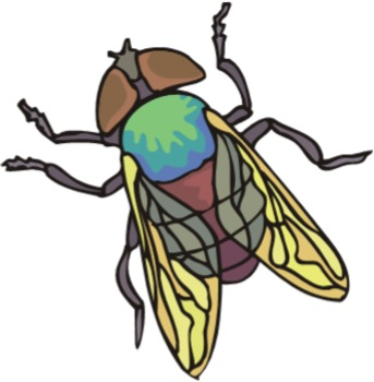 Insects  - Text and Exercise Sheets