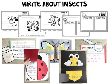 Insects Thematic Unit