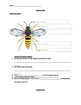 Insects Unit Pop Quiz