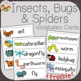 Insects Vocabulary Word Wall Cards FREEBIE