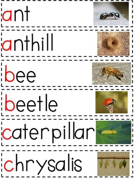 Insects Vocabulary Amp Word Wall Resources By Rita Mitchell
